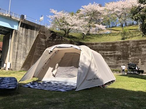 キャンプと桜